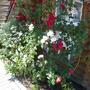 Мини-отель Экодом Белые росы, цветы, фото 27