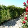 Мини-отель Экодом Белые росы, цветы, фото 37
